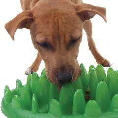 Green Interactive Dog Feeder