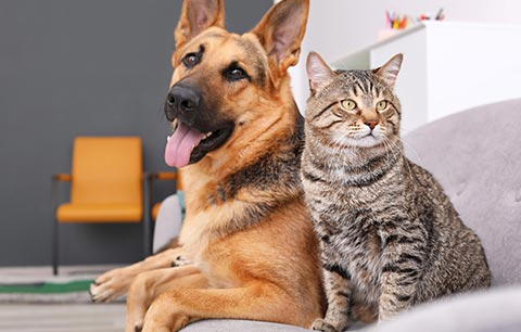 Your guide to skin conditions for cats & dogs