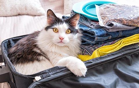 Desensitising your pet to car travel