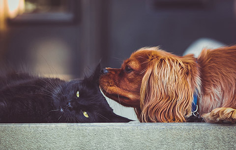 What are the signs of diabetes in pets