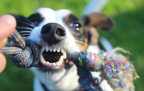 Top Dental Care in Cats & Dogs