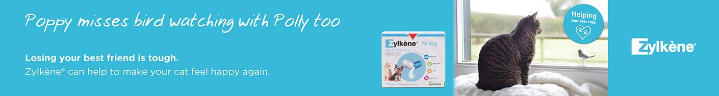 Zylkene for Cats