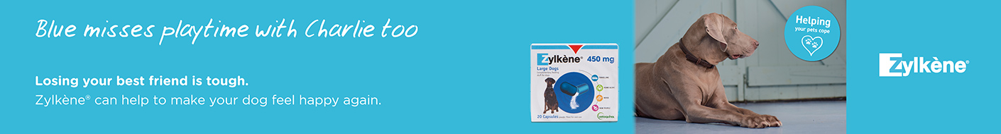 Use Zylkene to help pets deal with the loss of a loved one