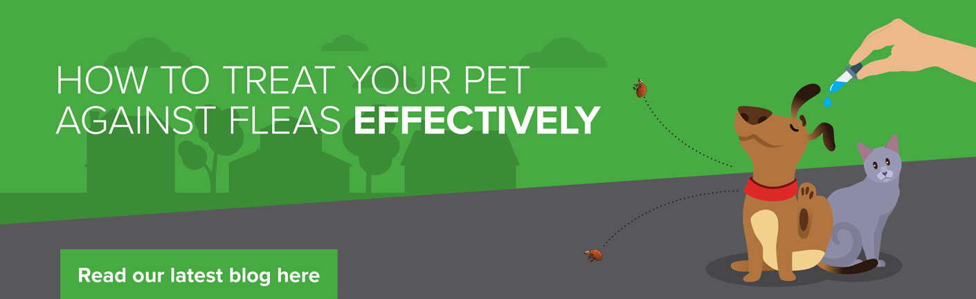 How to treat fleas effectively
