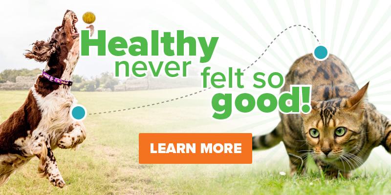 Pet Medication Pet Food Pet Supplies More Animed Direct