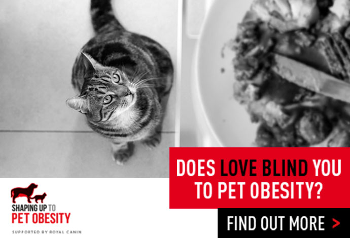 Royal Canin Obesity Banner Secondary
